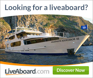 best-liveaboard-diving-deals